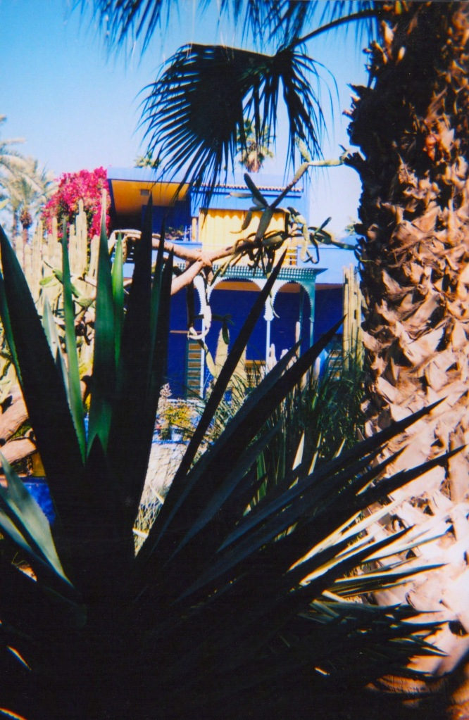 marrakechdisposable 3-001