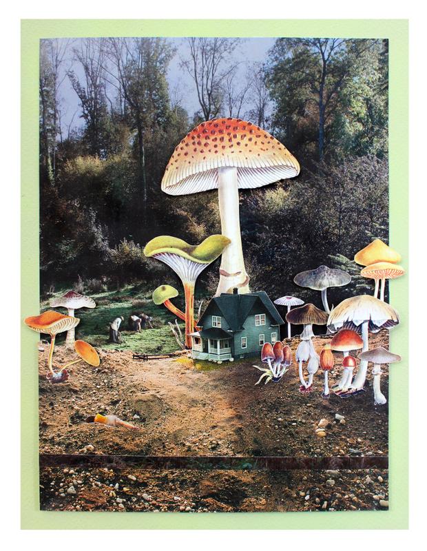 A Fungi Fairytale